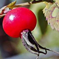 Очень полезный плод :: Татьяна Губина