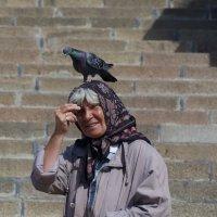 Любовь и Голубь :: Александр Павленко