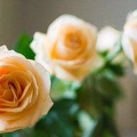 Розы :: Илья Любименко