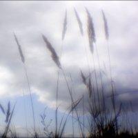 Там, за облаками.. :: galina bronnikova