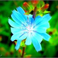 Цветик-семицветик :: Fededuard Винтанюк