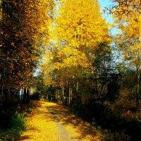 Осенний парк :: Irina