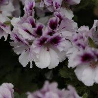 Цветочный хоровод-605. :: Руслан Грицунь