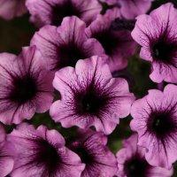 Цветочный хоровод-602. :: Руслан Грицунь