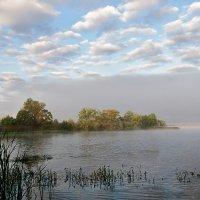 утренний туман :: Galina