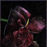 Цветок герани во мраке ночи :: Нина Корешкова
