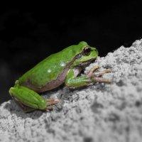 frog :: Andrey Stepantsov