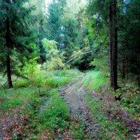 По лесной дороге :: Светлана Лысенко
