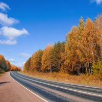Дорога в осень :: Мария Парамонова