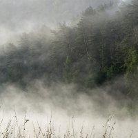 Лес у тумане на Угре :: Денис Щербак
