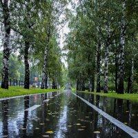 После дождя :: Василий Аникеев