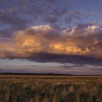 Тучи мглою небо кроют... :: Elena Zueva