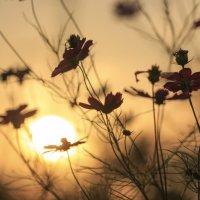 Сентябрь, закат :: Rimma Telnova