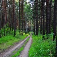 В лесу :: Алексей http://fotokto.ru/id148151Морозов