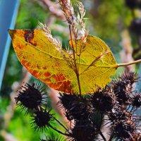 ... Осень.... :: Victor