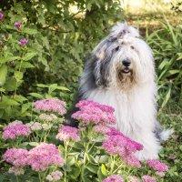 Манечка в осенних цветах :: Лариса Батурова
