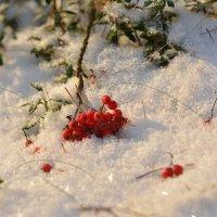 красное на белом :: Валентин Кошелев