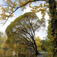 Осень в парке :: Наталья Мацкевич