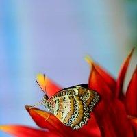 тропическая красота :: Алексей Смольников