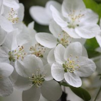 Цветочный хоровод-615. :: Руслан Грицунь