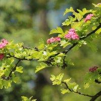 Цветочный хоровод-612. :: Руслан Грицунь