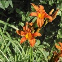 flowers :: Юлия Денискина