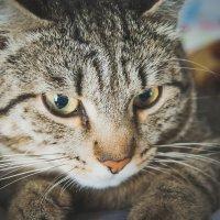 Ну и котяра. :: Света Кондрашова