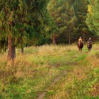 Конные прогулки :: Валерий Талашов