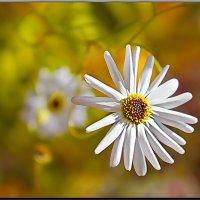 Цветы осени :: Любовь Чунарёва