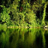 Отражение в реке :: Татьяна Пальчикова