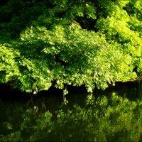 Ветви над водой :: Татьяна Пальчикова