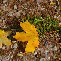 Падают листья... :: Борис Гуревич