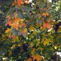 Осень у моего окна... :: Елена