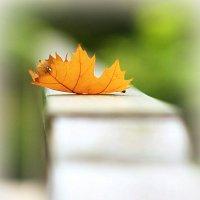 Осень на перилах :: Alexander