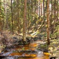 Лесной ручей :: Наталья