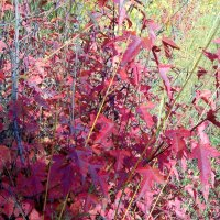 Разноцветная осень :: alemigun