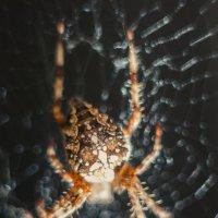 Arachnophobia 5 :: Александр Мирошниченко