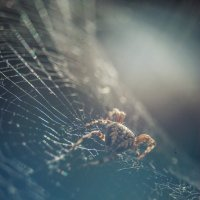 Arachnophobia 3 :: Александр Мирошниченко