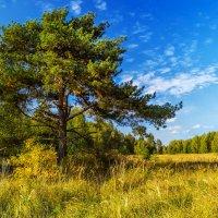 Бабье лето :: Андрей Дворников