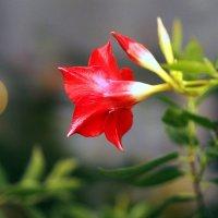 Цветы у мамы (первый уже распустился) :: Александр Попов
