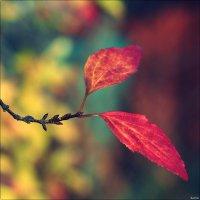 Осенью раскрашенный лист :: Swetlana V