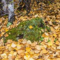 мох и листья :: Сергей Сол
