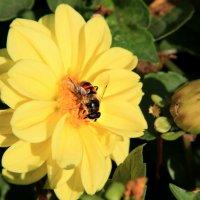 пчелка :: Tiana Ros
