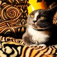 Его Высочество! :: Екатерина ___