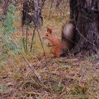 В лесу :: Андрей Купер