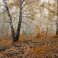Утро в лесу :: Анатолий 71