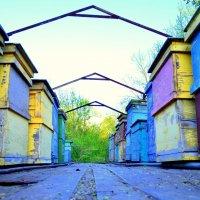 Пчелиные улицы :: Марья Зинченко