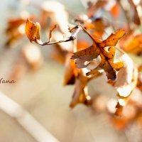 Осень :: Yana Ortman