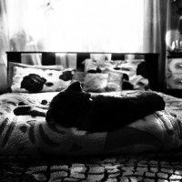 кошачьи сны :: Катерина Чебышева