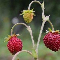 Последние осенние ягодки ! :: Damir Si
